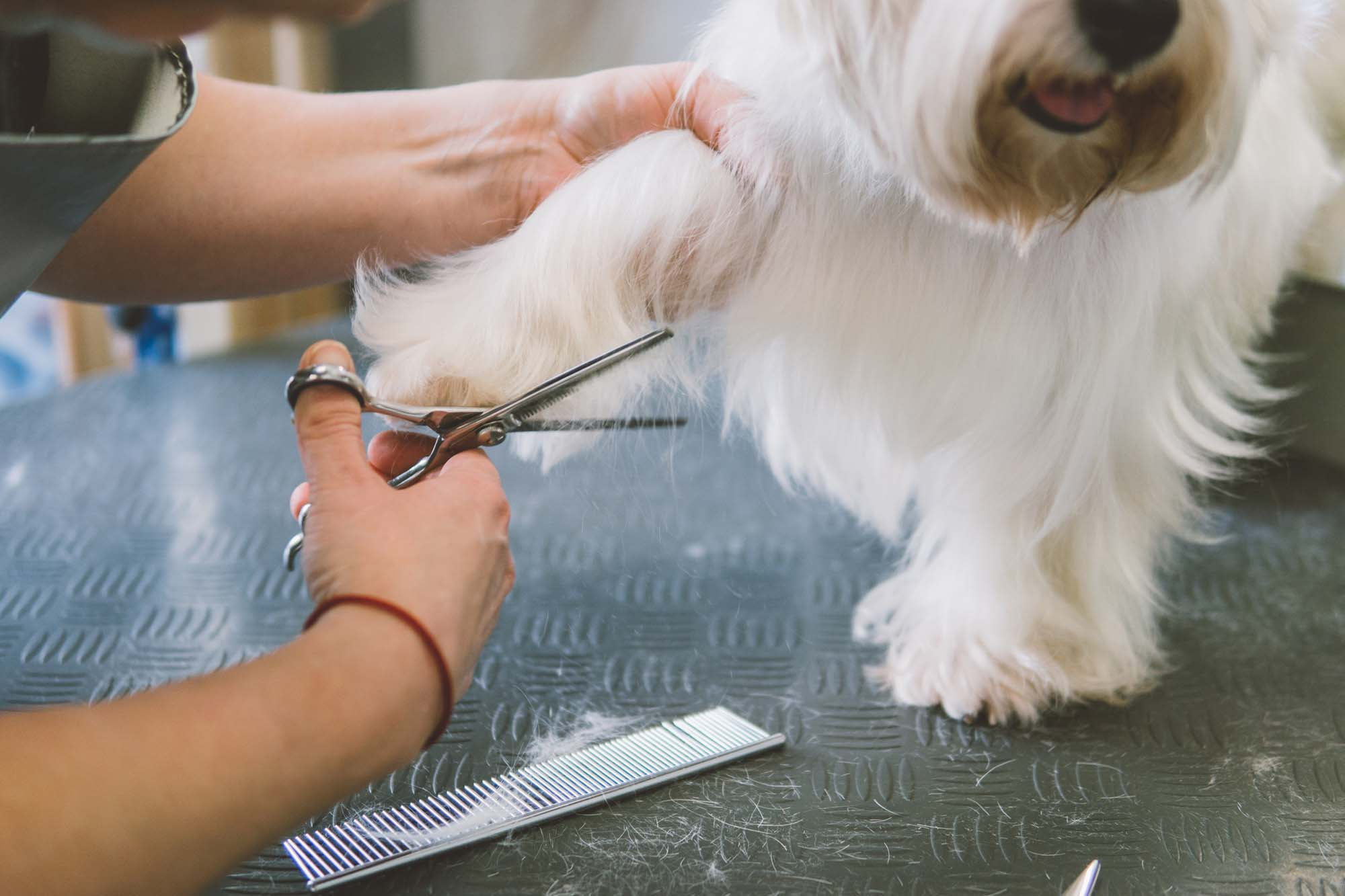 Dog grooming in Ballyragget
