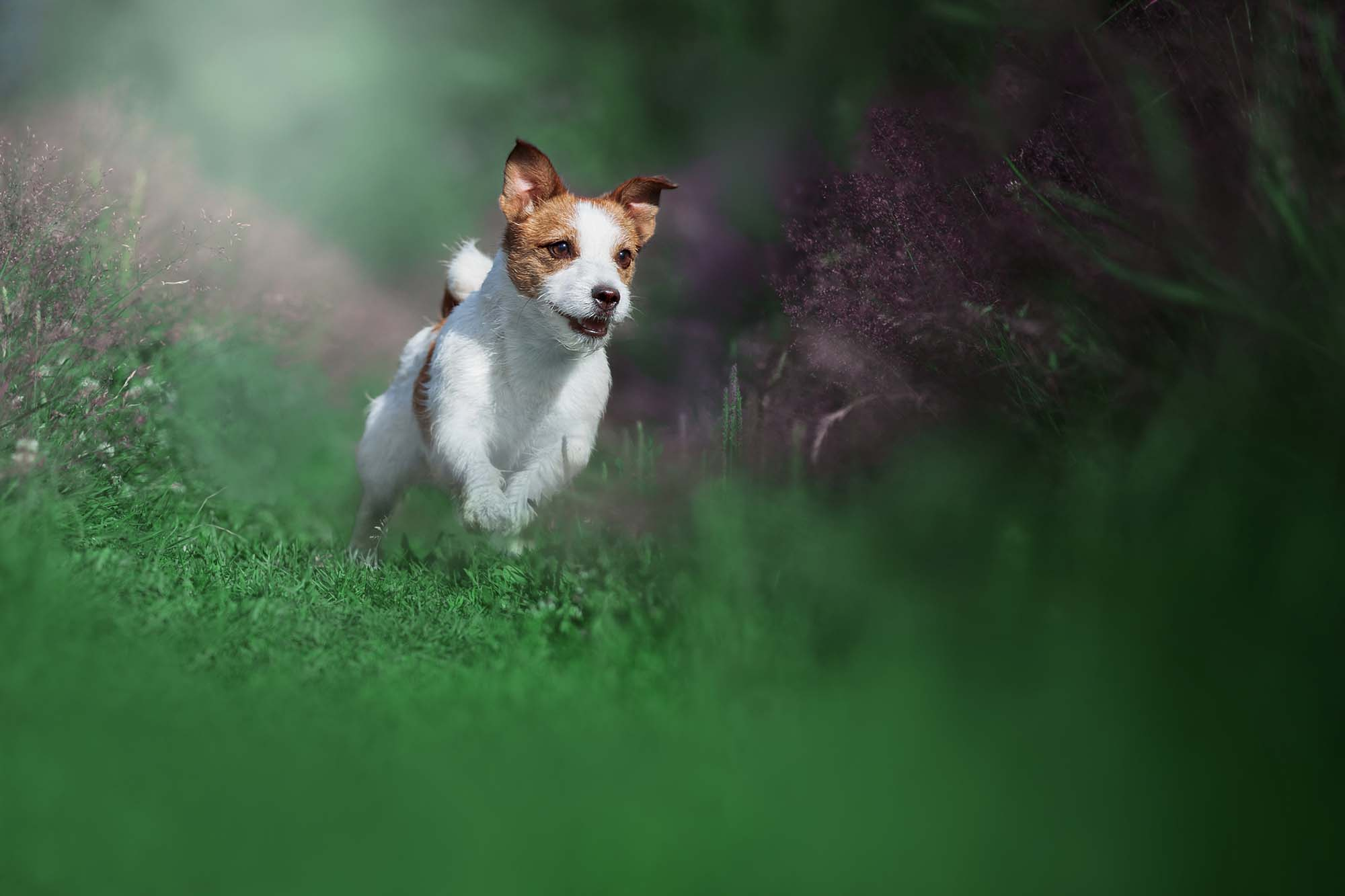 Trusted dog food suppliers